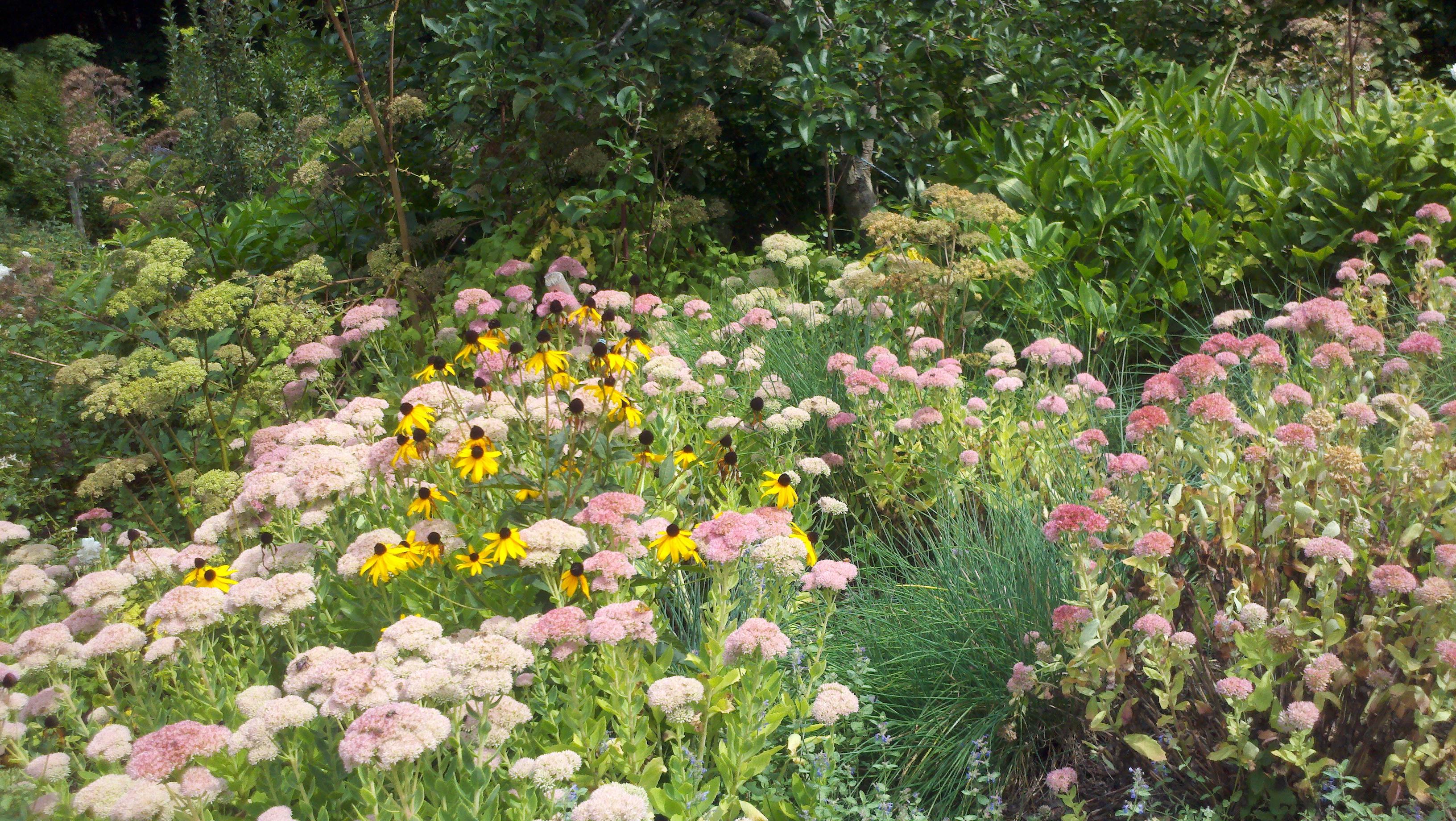 Nodding onion gardens retirement community wildflower for Wildflower garden designs